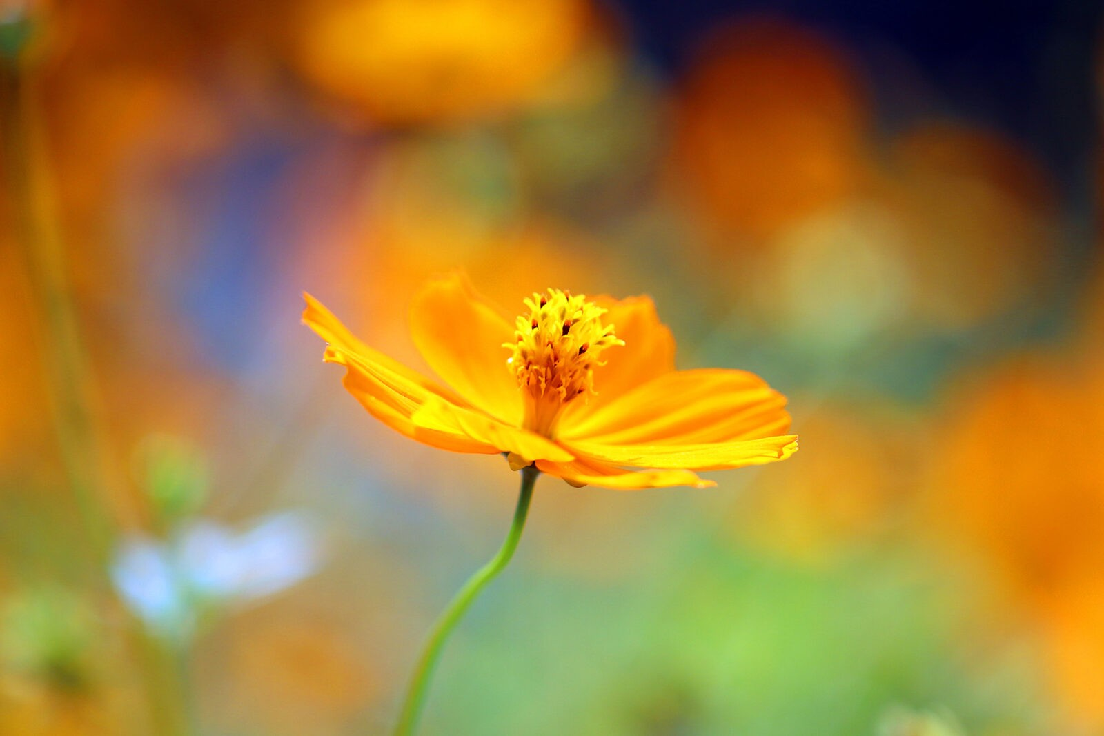 10 Tips for Improving Your Flower Photos